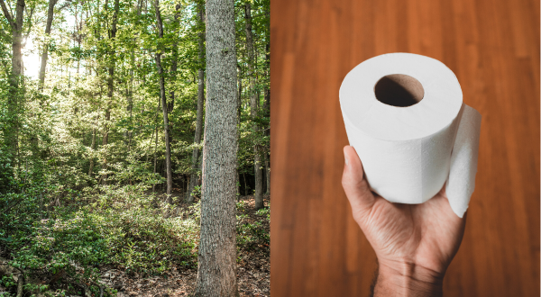where toilet paper fits in the forest industry