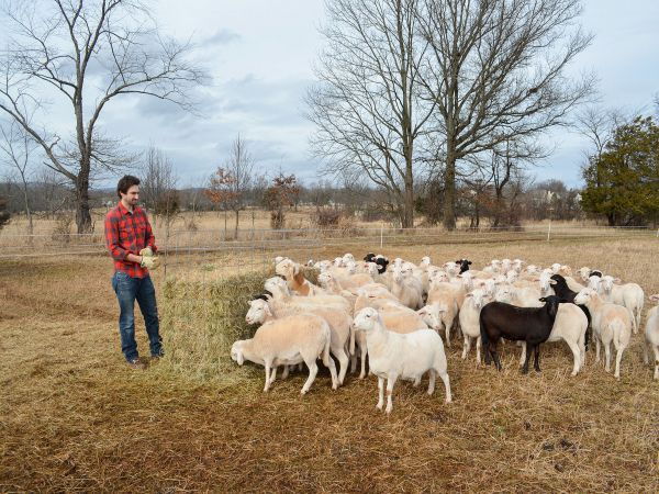 Keith Stauffer, Sheep Farmer, standing in field with sheep