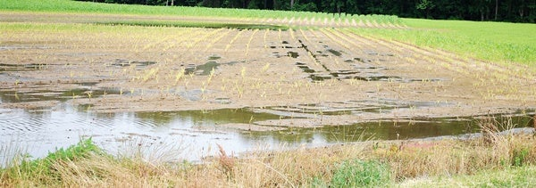 Flooded fields aren't the only thing the crop insurance can protect against