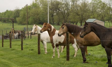 5 Questions to Ask Before Purchasing a Horse Property