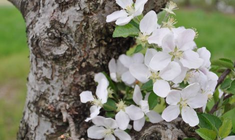 photo of apple blossoms Upcoming Farmer Resources and Events