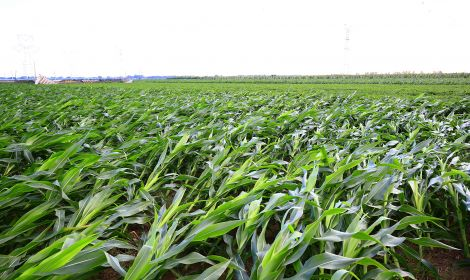 New Crop Insurance Options for 2021