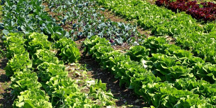vegetable farm Operating Loan