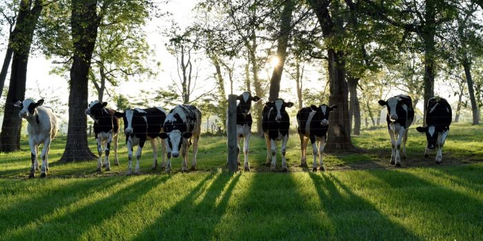 dairy farm Operating Loan