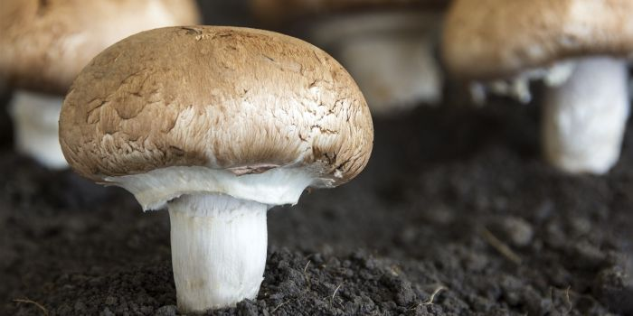 mushroom farm Operating Loan